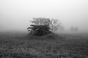 A carin in the fog of a Middle Tennessee morning. 18x12 $120.00